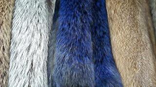 В наличии шкурки лисы эксклюзивного цвета